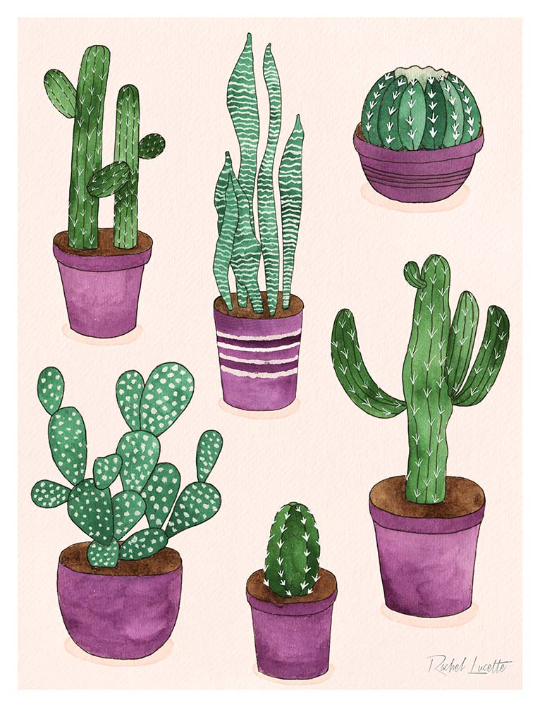 selection of cacti watercolour